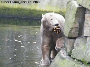 Photo: ... und ein Ball herausgefischt :-)