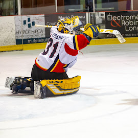 Karaté Kid ! by Yves Sansoucy - Sports & Fitness Ice hockey ( hockey, goal, pads, save, ice )