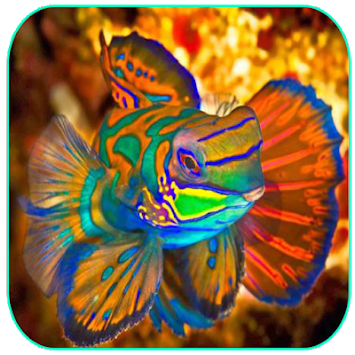 Download Ikan Hias Cantik Apk Latest Version App For Android Devices
