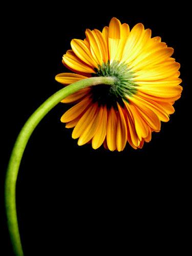 Arancione... di Felicia