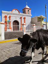 Photo: Iglesia de Yumina con vaca caminando al almuerzo Paucarpata - Yumina - Sabandia