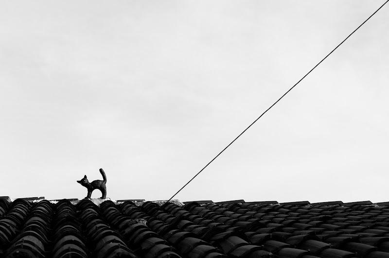 La gatta sul tetto che scotta di Barbara Surimi