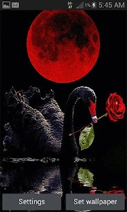 Red Rose Swan LWP screenshot 0