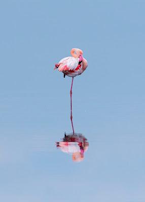 Flamingo flower ! di Bitop62
