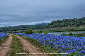 Photo: Muleshoe Bend Recreation Area is a large (6.5 miles of bike trails) that is covered with bluebonnets in the spring.