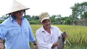 Ho Chi Minh City: Rat Hearts & Porcupine Parts thumbnail