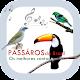 Pássaros Brasil - Os melhores cantos. APK