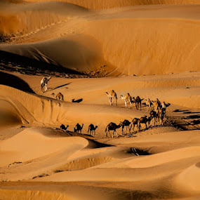 by Adeeb Alani - Landscapes Deserts ( #nikon #canon #photographers )