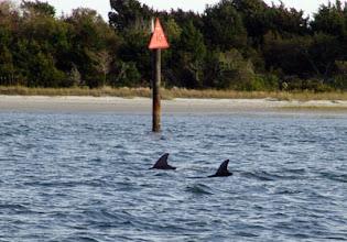 Photo: Atlantic Bottlenose Dolphins