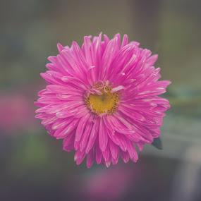 by Robin Alin - Flowers Single Flower (  )