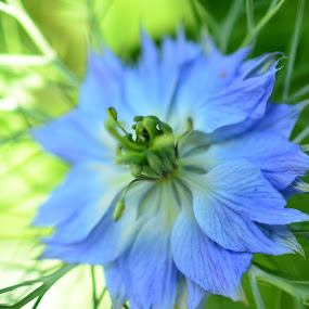 Cornflower by Terrence Francis - Nature Up Close Flowers - 2011-2013