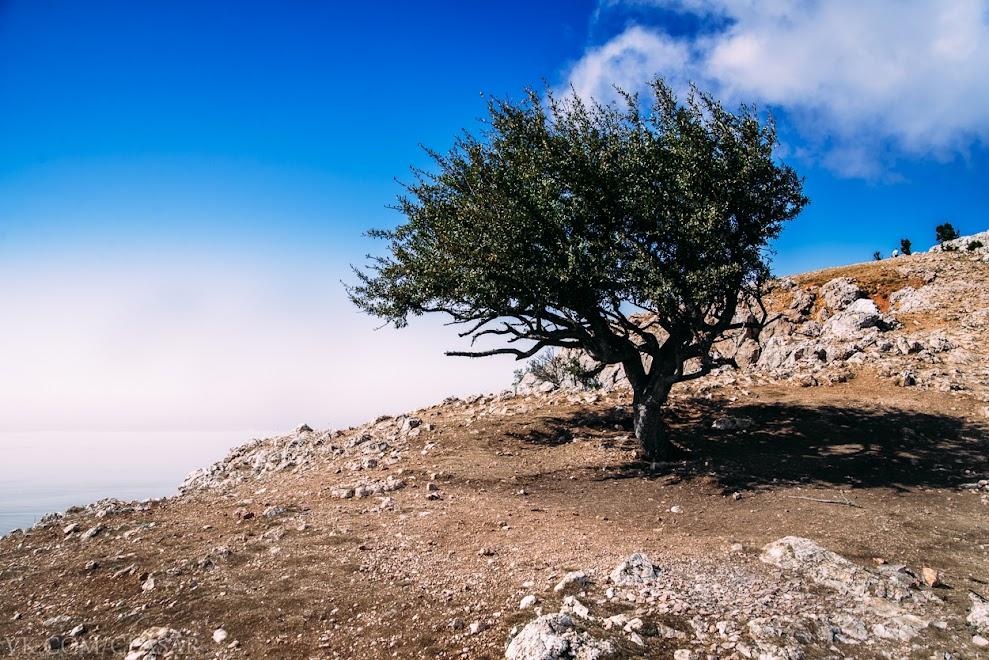 Дерево на горе Ильяс-Кая