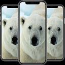Polar Bear Wallpaper APK
