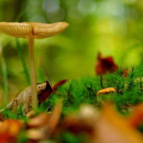 on the moss by Dragutin Vrbanec - Nature Up Close Mushrooms & Fungi ( moss, autumn colors, leaves, mushrooms )
