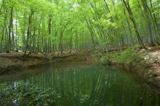 美人林池塘