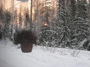 """Photo: """"Eihän tässä ole mitään järrrkeee"""" - no pointti on siinä, että valaisen (kuten aurinko taustalla) sitä kuinka niukoilla väreillä on tultava toimeen Suomen talvessa.."""