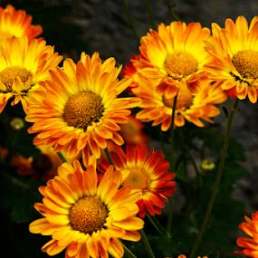 by Rajib Chatterjee - Flowers Flower Gardens
