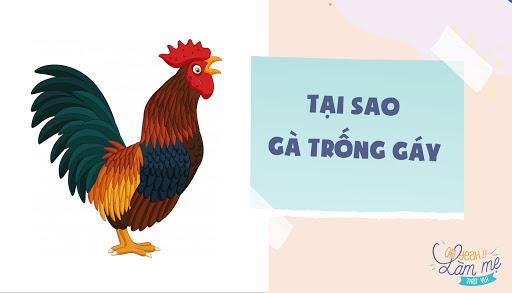 top-3-cau-chuyen-me-ke-moi-dem-se-nuoi-duong-be-thanh-nguoi-tai-thong-minh-vuot-troi