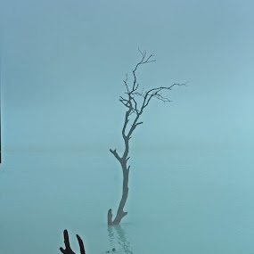 Cold and Lonely by Yoseph Ismail - Landscapes Waterscapes ( foggy, nature, tree, nature photography, lake, nature photo,  )