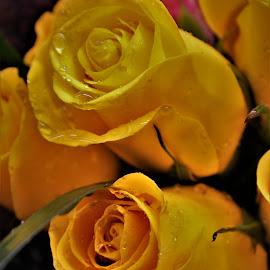 by Michelle Brush - Flowers Flower Arangements (  )