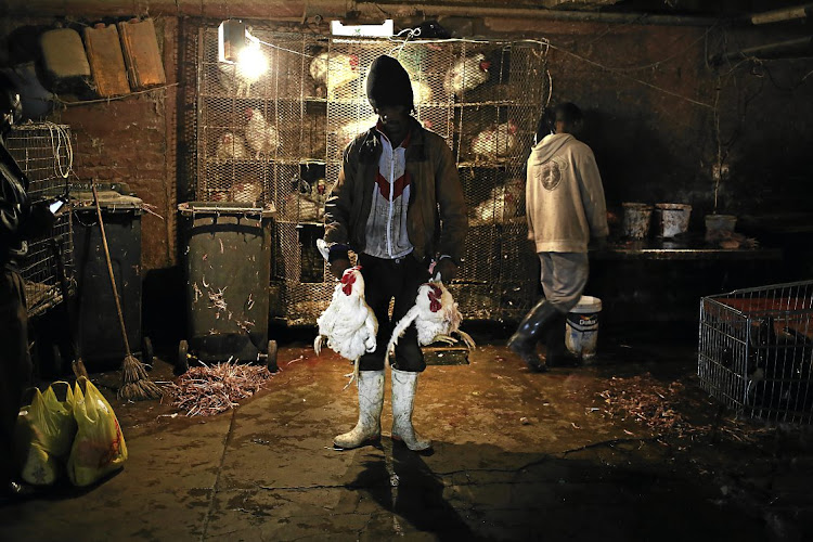 WHAT BAN? A man [identity protected], poses for a portrait in a basement parking garage, where chickens are sold in Johannesburg's inner city
