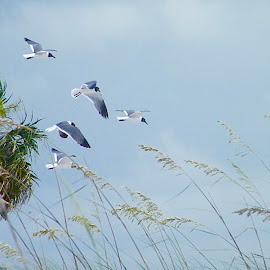 Playing in the cool sea breeze by Donna Probasco - Novices Only Wildlife (  )