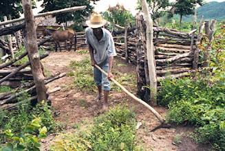 Photo: Na época das chuvas, o trabalho nas roças e nos terreros é redobrado, pois não podem perder as plantações no meio do mato.