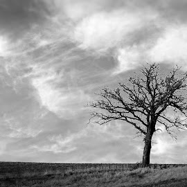 Lonely by Dale Minter - Black & White Landscapes ( clouds, field, tree, black and white, lonely,  )