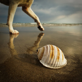 shell and legs by Zdenka Rosecka - Nature Up Close Sand (  )