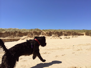 Photo: Monty on Eccles beach