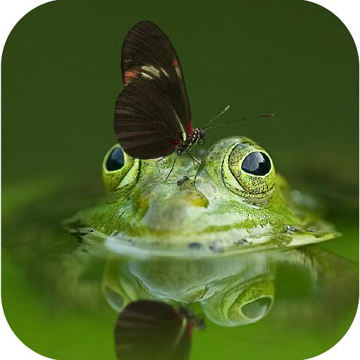 žáby datování