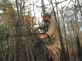 Georgia Swamp