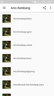 Kicau Anis Kembang Ngekek Panjang - náhled