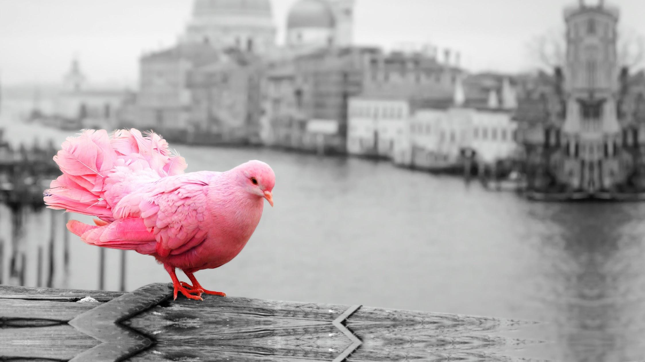 Pinkbird Studio