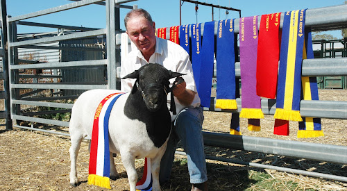 Whynot Dorpers' Mark Gett with grand champion ram at the Royal Easter Show Whynot Alvin.