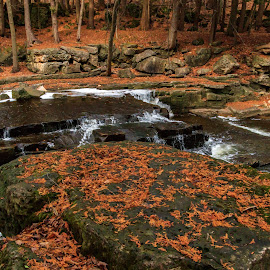 Leaf Covered Rocks by Kathy Suttles - Nature Up Close Rock & Stone