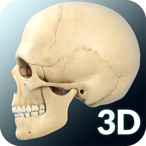 Download Dental Anatomy & Skull 1 0 APK File For Android