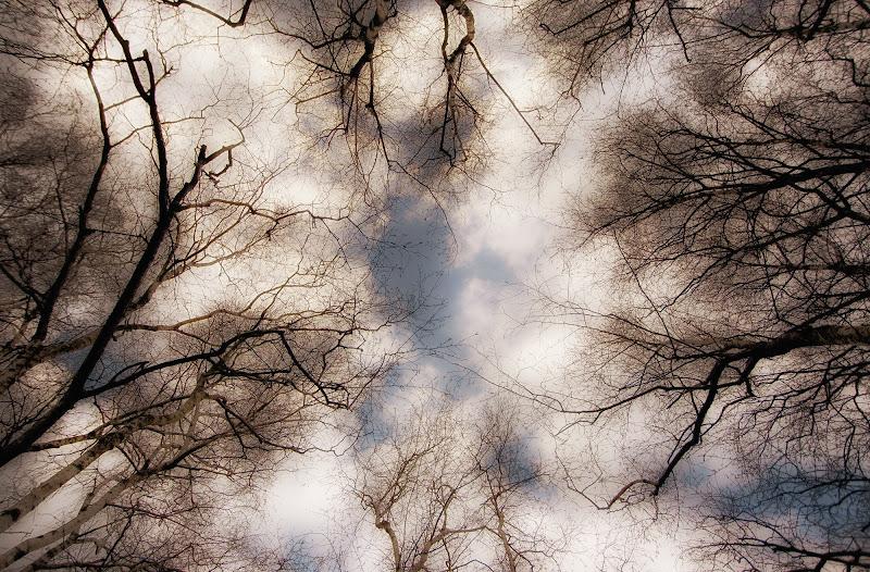 relax tra alberi e nuvole di rik
