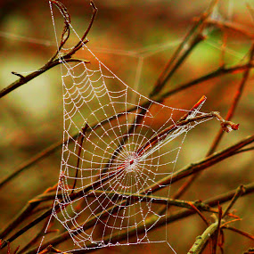 Stretching... by Nani Garu - Nature Up Close Webs ( water, dew, stretch, web, morning )
