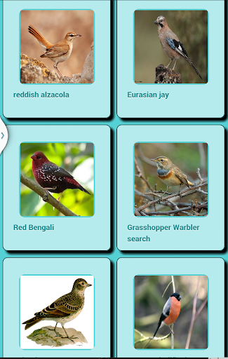 Bird Sound Apk Download 12