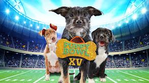 Puppy Bowl XV thumbnail