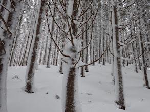 凍てつく樹木1