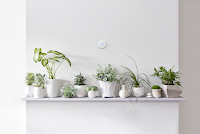 Nest Thermostat above plants