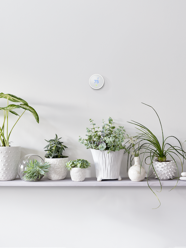 Nest Thermostat above plants