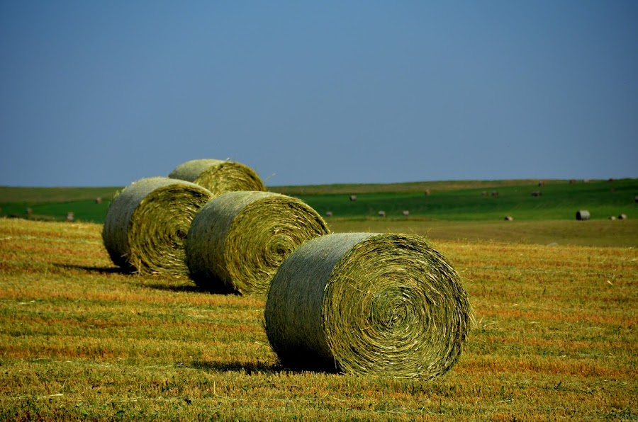 by Aleksandra Glapa - Landscapes Prairies, Meadows & Fields