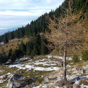 by Gino Libardi - Landscapes Mountains & Hills ( winter, landscape photography, winter colours, forest, landscapes, landscape )