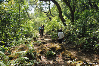 Photo: Jungle Trails...