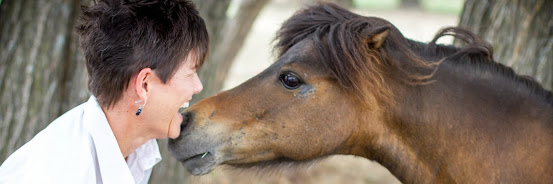 Reflect and Reconnect through Horses