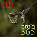 """365 התנ""""ך HD icon"""