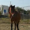 Skyrian Horse (αλογάκι της Σκύρου)